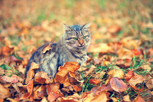 Cat sitting on fallen leaves in the garden