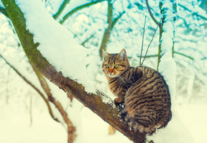 Cat sitting on the snowy tree in the forest