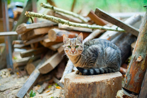 Cat sitting on the stump