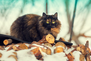 Cat sitting outdoors in winter on firewood