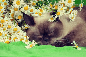 Cat sleeping in flowers