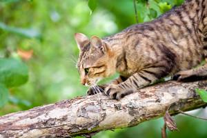 Cat sneaks on a log
