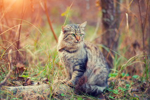 Cat walking in the forest