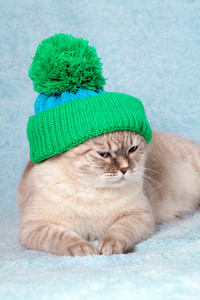 Cat wearing a knitted cap lies on blue blanket