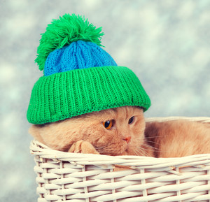 Cat wearing a knitted cap lying in a basket