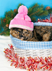 Cat wearing a knitted cap sits in a basket