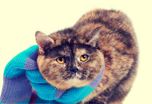 Cat wearing a scarf