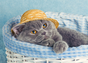 Cat wearing a straw hat sitting in a basket