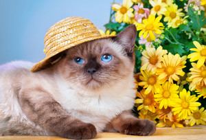 Cat wearing a straw hat sitting next to a bouquet of daisies