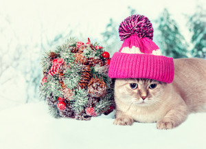 Cat wearing cap with pompom lying next to Kissing Bough outdoors in winter