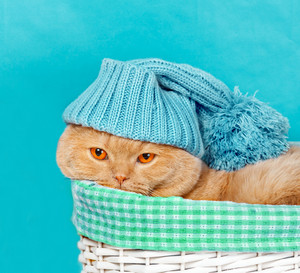 Cat wearing hat lying in a basket