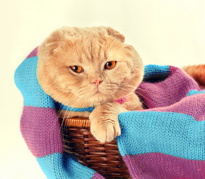Cat wearing knitted scarf sitting in a basket