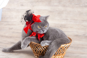 Cat wearing red hat lying in a basket