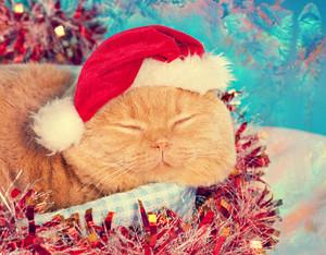 Cat wearing santa hat sleeping in a basket
