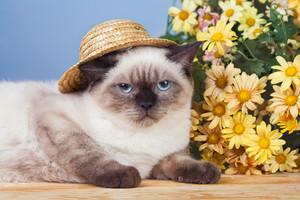 Cat wearing straw hat near flowers
