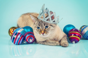 Cat with Christmas decoration on blue background