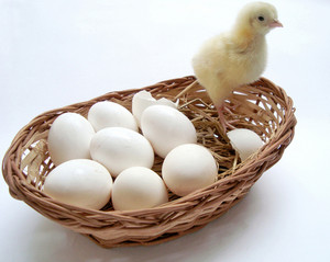 Chicks And Eggs Basket