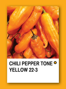 Chili Pepper Tone Yellow. Color Sample Design