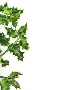 Christmas Border Made Of Green Holly