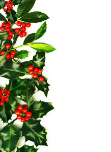 Christmas Border Made Of Holly With Red Berries