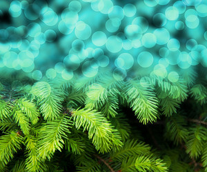 Christmas Fir Blue Abstract Background