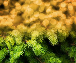 Christmas Fir Gold Abstract Background
