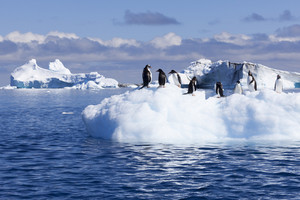Clock of penguins on a sunlit iceberg