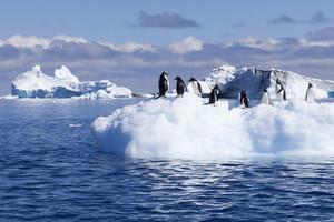 Clock of penguins on a sunlit iceberg