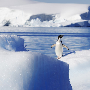 Close up of a penguin on a sunlit iceberg