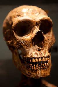 Close up of an old Human skull fossil.