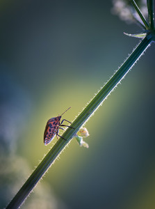Close up of bug sitting on plant. Close up of insect photographed in summer afternoon