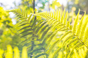 Close up of fern leaves growing in forest