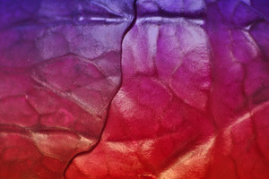 Close Up Of Red Cabbage Leaf