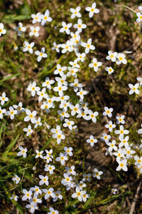 Close up of some small yellow and white wild flower.