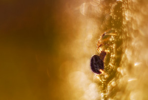 Close up of spider sitting on  web in morning light