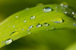 Close up of water droplets on grass leaf. Beautiful nature background