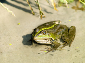 Close Up Photo Of A Nice Frog