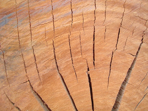 Close_up_tree_trunk_surface