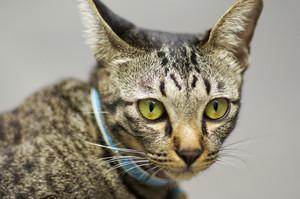 Closeup cute cat with blur background