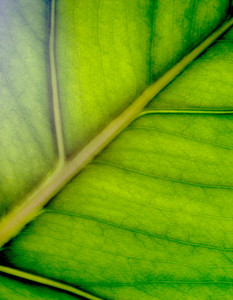 Closeup Leaf Background