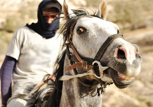 Closeup of a rider on horse