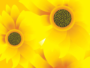 Closeup View Of Sunflowers