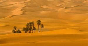 Cluster of trees among sand dunes in the desert