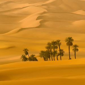 Cluster of trees growing in an endless, sandy desert