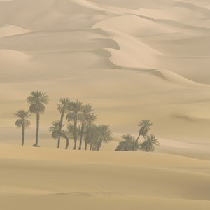 Cluster of trees growing in the desert