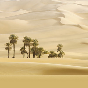 Cluster of trees in an endless desert