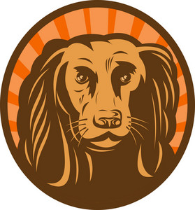 Cocker Spaniel Head Front View With Sunburst