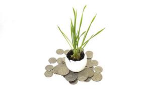 Coins Money Plant