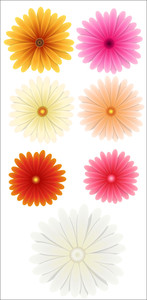 Colored Flowers Vectors