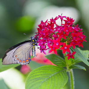 Colorful butterfly perched on a flower